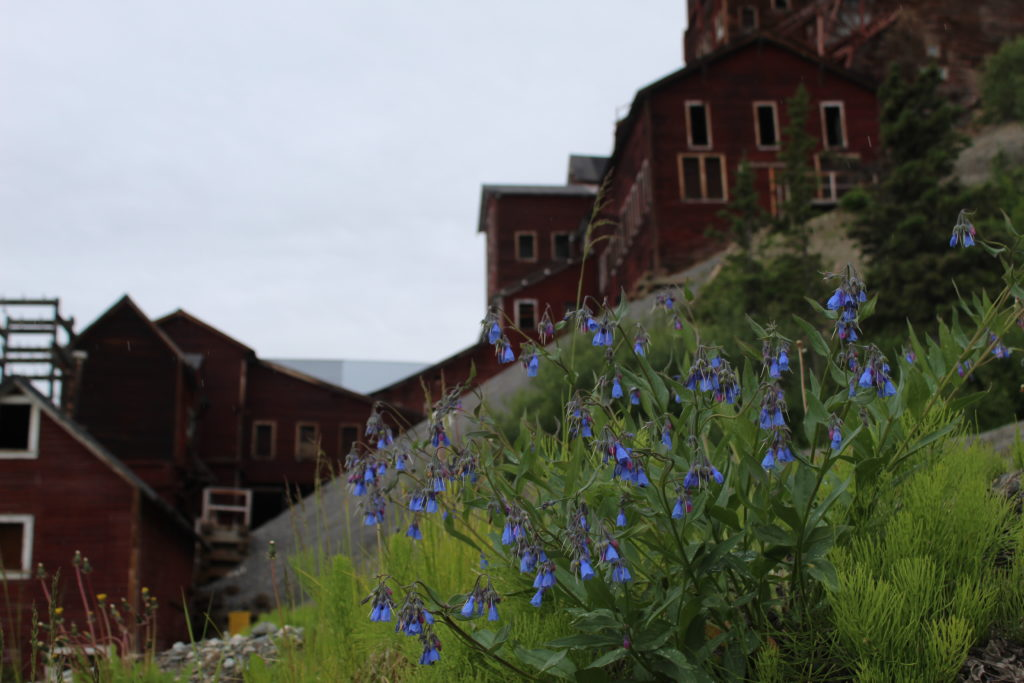 Original Kennecott Mill Building with Blooming Flowers